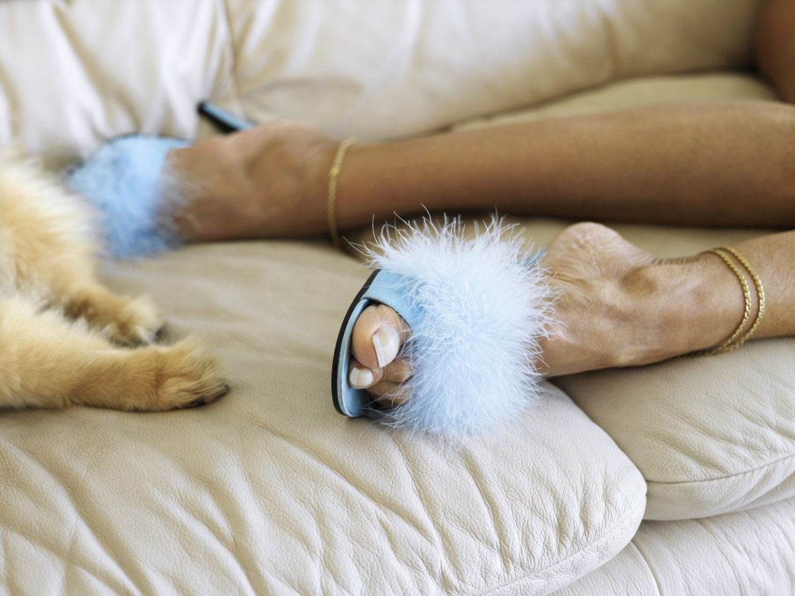 Pet Friendly Luxury Resorts Hotels Outfits For Travel